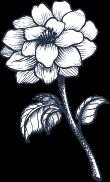 Naše<br> kvetinárstvo