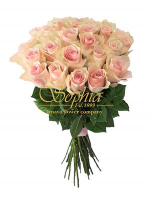 Ružová Athéna - Špeciálna cenová ponuka